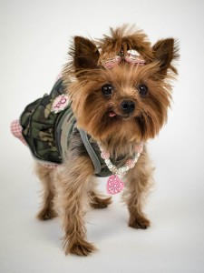 yorkie dressed up studio dog photography session