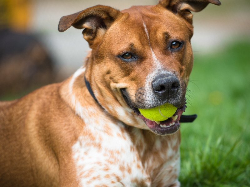 dog photography tips part 1