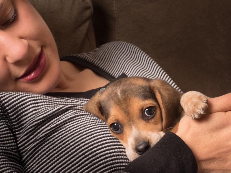 fairfax-va-dog-photographer-pet-photography-tips-3
