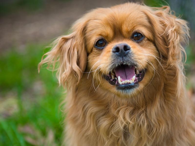 fairfax-va-dog-photographer-pet-photography-tips-5