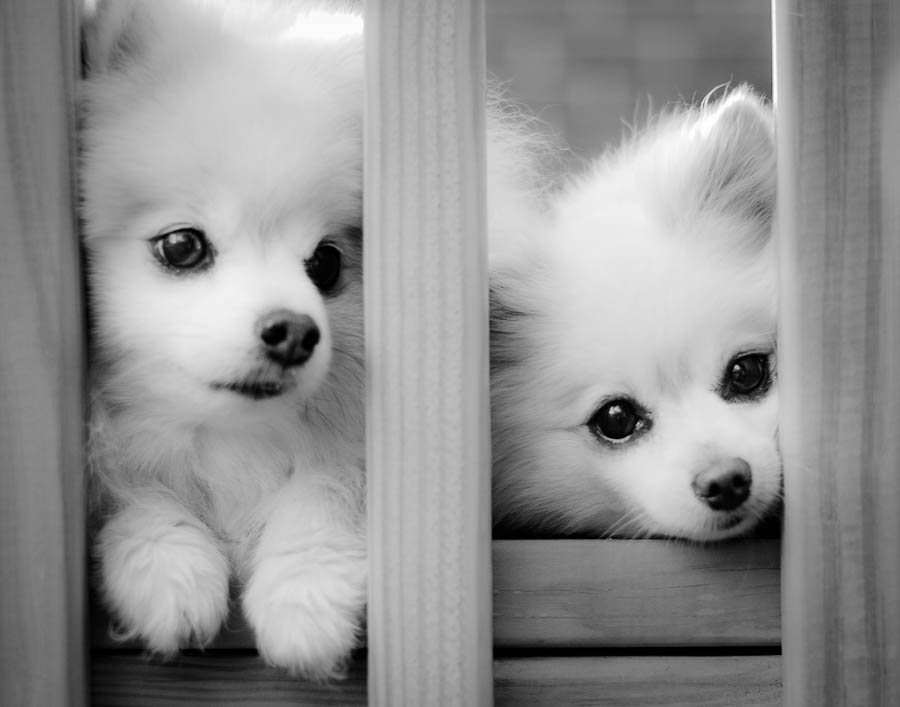 fairfax-va-pet-photographer-dog-location-4