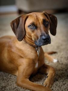 Fairfax-VA-pet-photographer-dog-main-10
