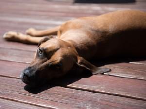 va-pet-photographer-dog-photography-tips-0380