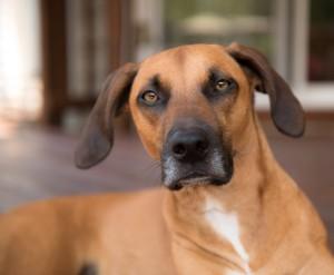 va-pet-photographer-dog-photography-tips-0383