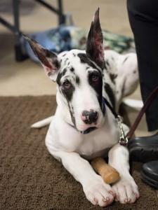 va-pet-photographer-dog-photography-tips-6591