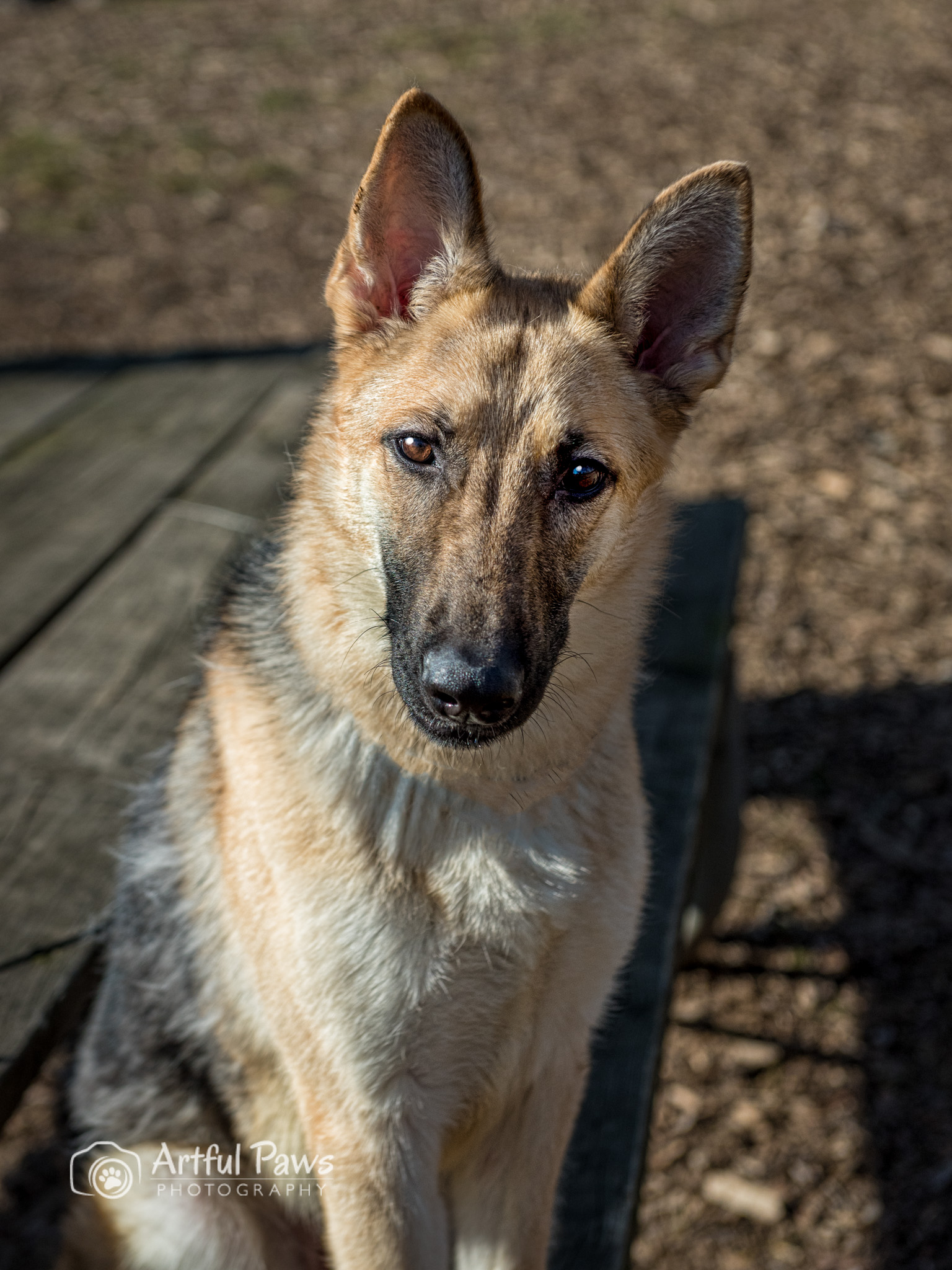 Sweet And Smart Rescue Pet Of The Week Fairfax Va Dog