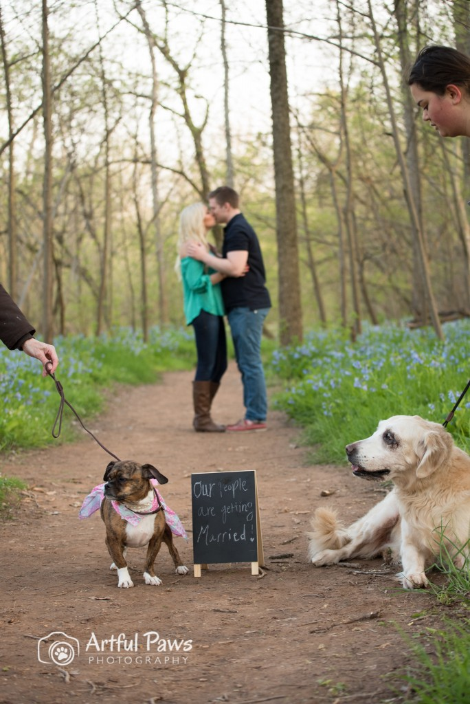 VA engagement photo session with dogs