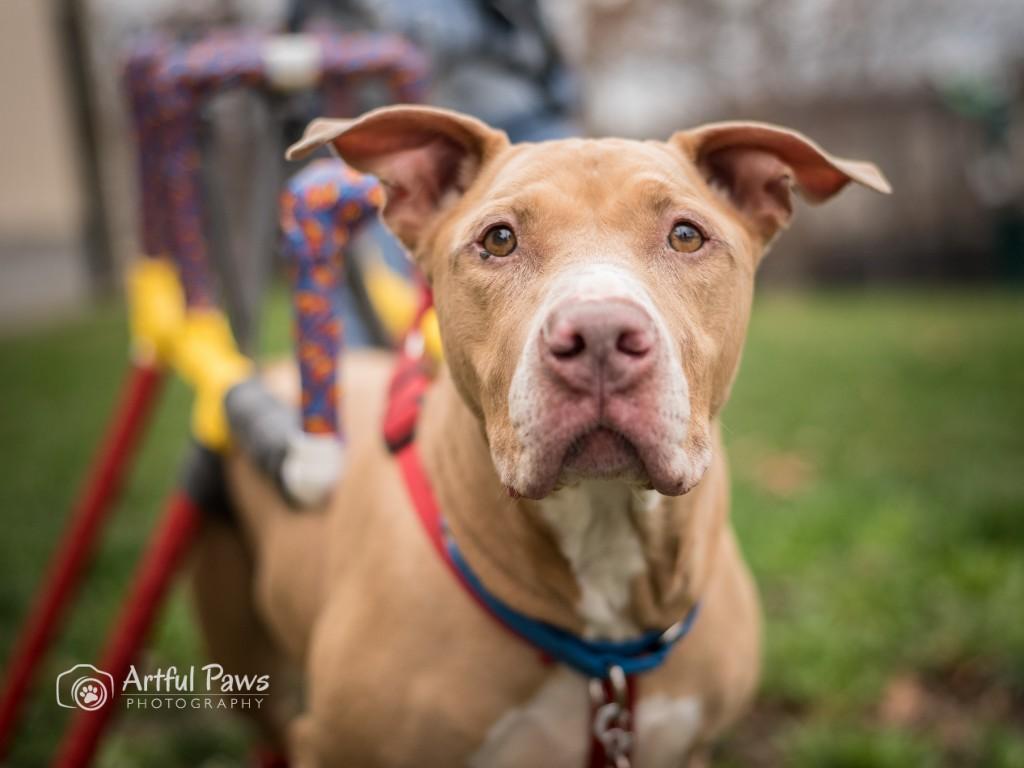 artful-paws-fairfax-va-pet-photographer-rescue-dog-shelter-5865-1024x768.jpg