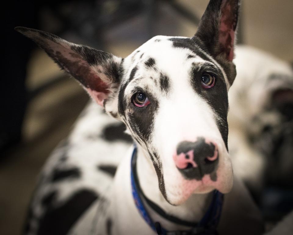 va-pet-photographer-dog-photography-tips-6578.jpg