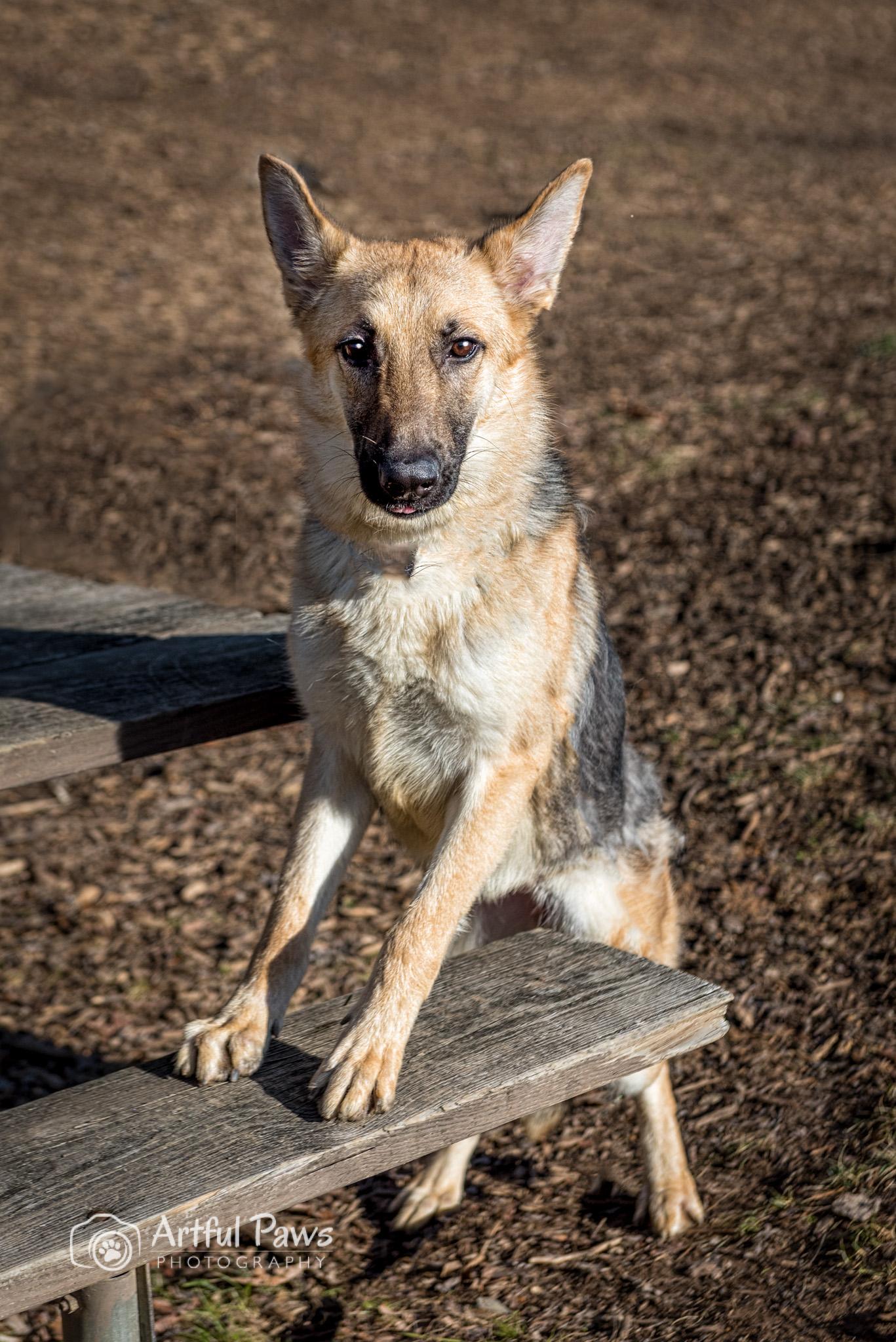Fairfax Va Dog Rescue