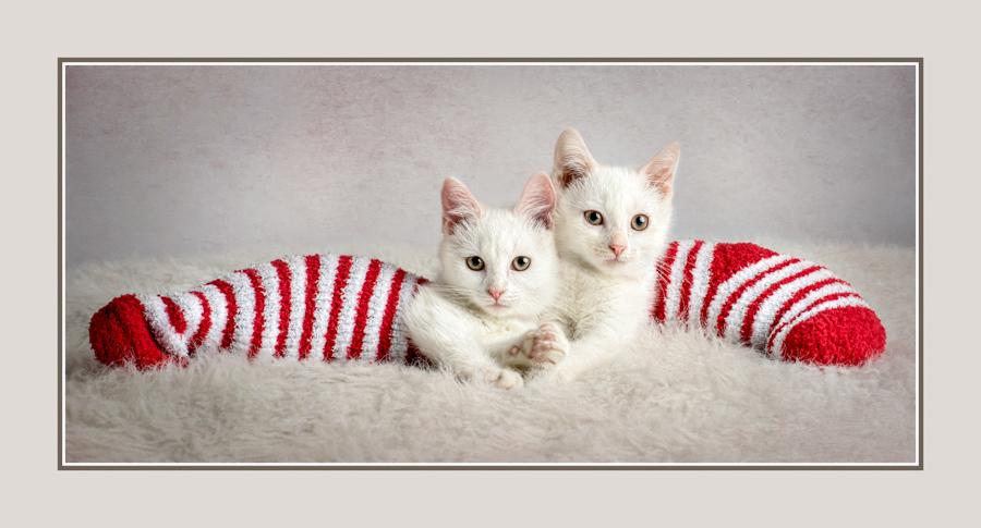 stocking-stuffers-.jpg