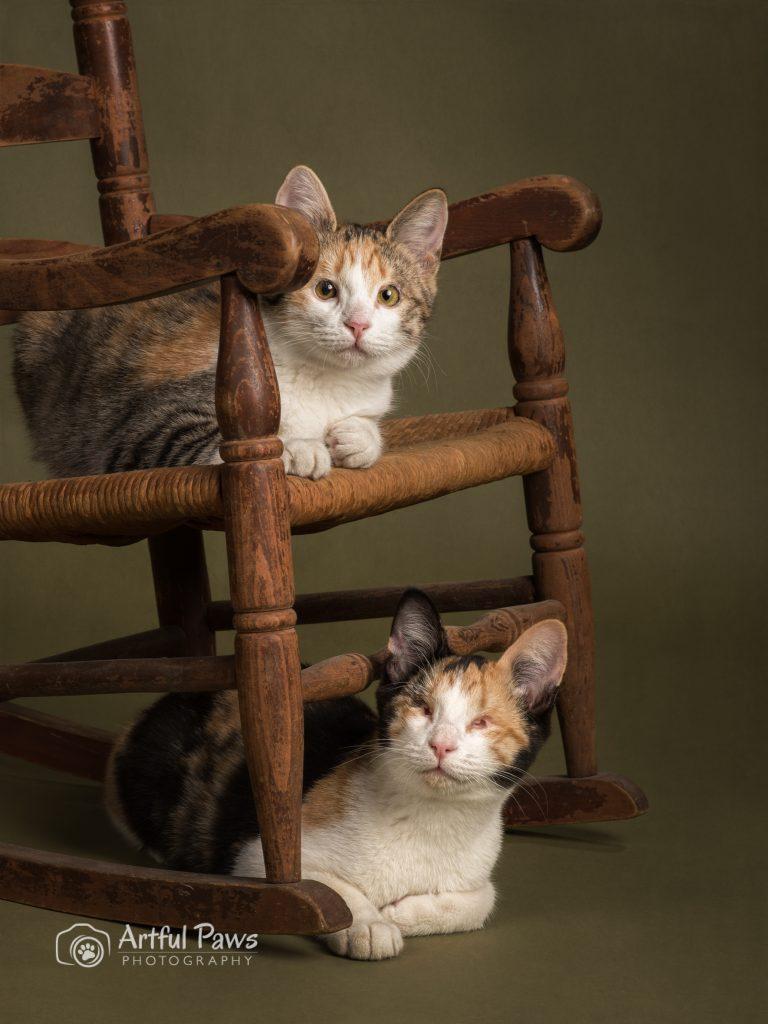 Eye-kittens-1127-768x1024.jpg