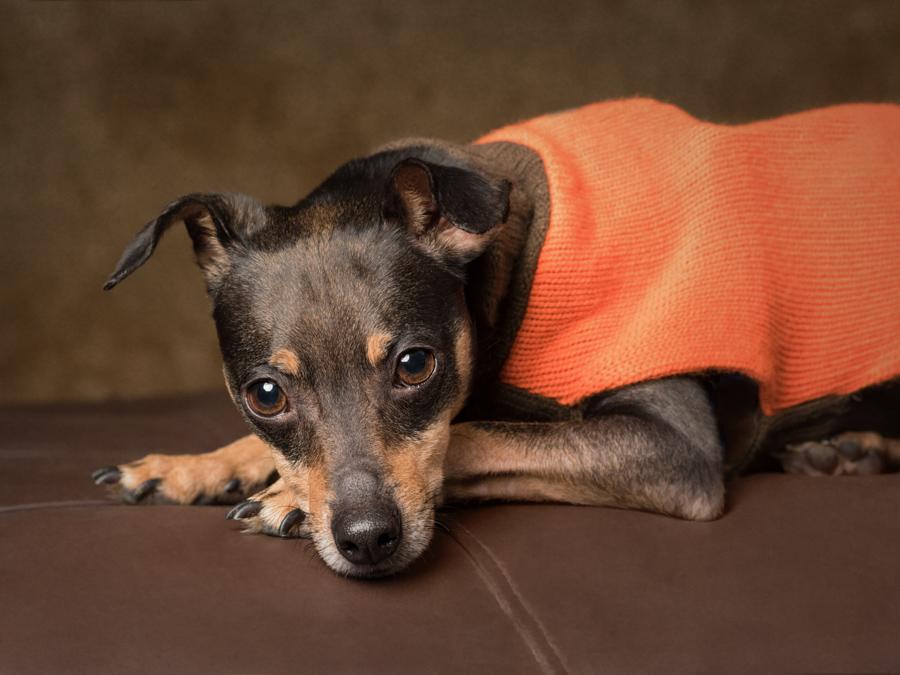 va-dog-photographer-fcas-shelter-rescue-dog-photography-0938.jpg