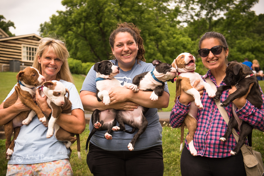 six pit bull puppies with people at the wine whiskers and wags event