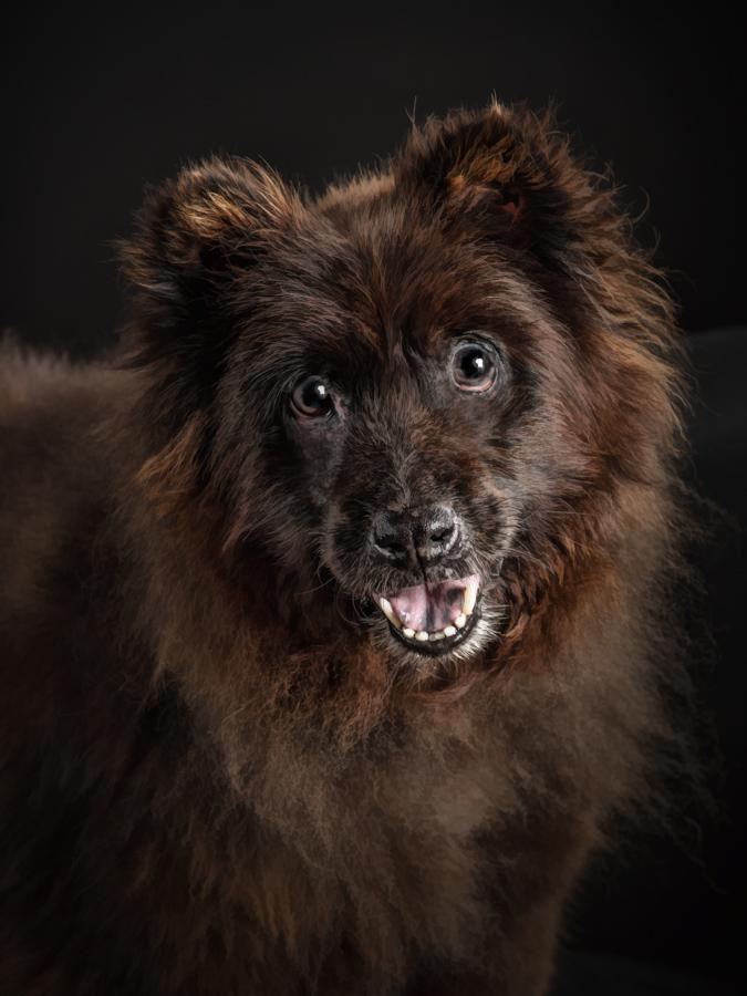 low-key-brown-chwo-studidog-photography