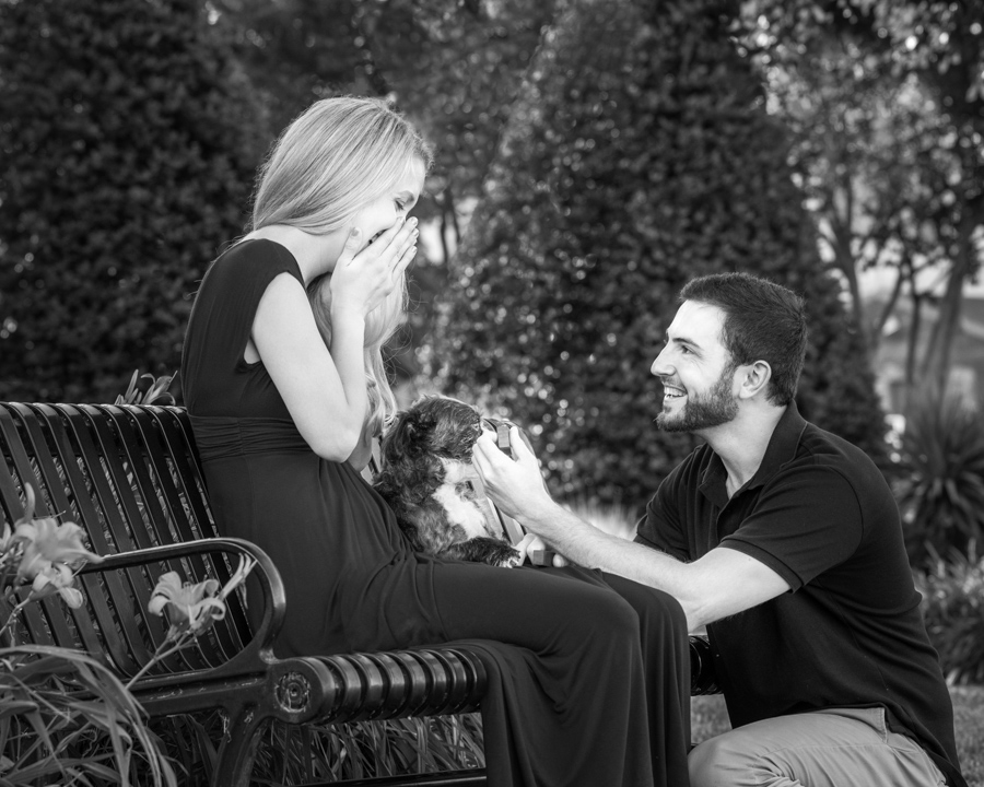 Man-proposes-during-dog-photo-session