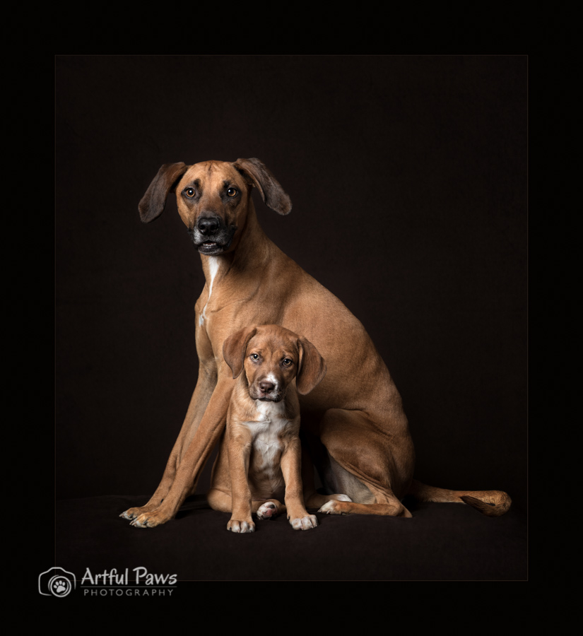 dog-with-puppy-sitting-under-low-key-studio-dog-photography-ipc-merit-award