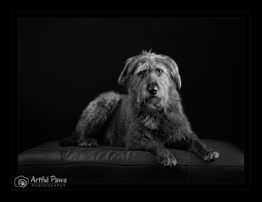 black-and-white-shaggy-dog-loan-collection-ppa-ipc