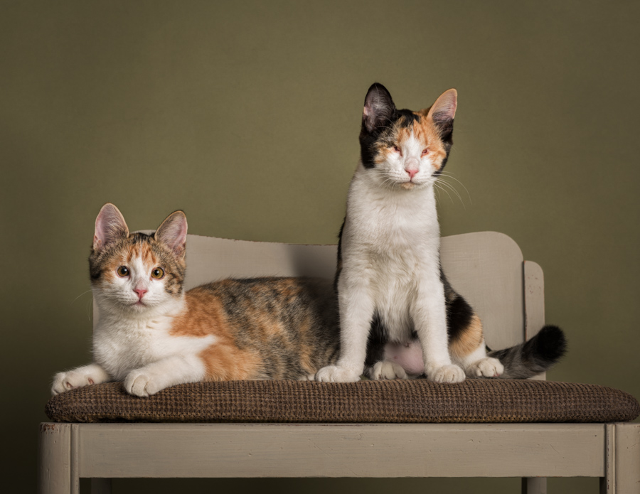 blind-kittens-studio-pet-photography