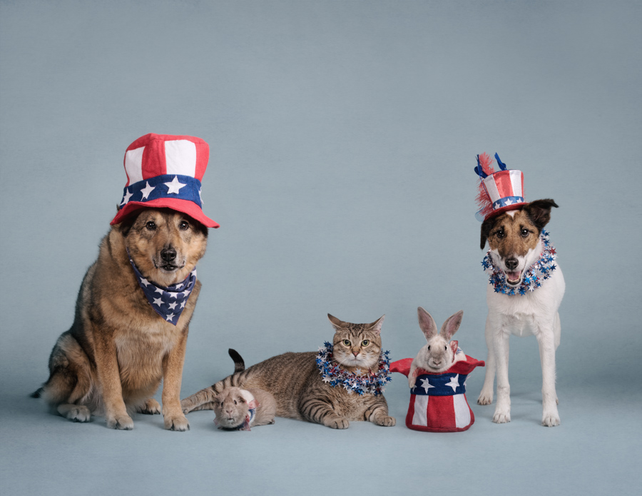 patriotic-pets-jul-fourth-dogs-animals