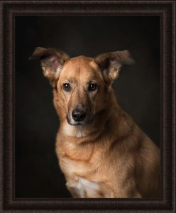 framed-portrait-studio-dog-photography-low-key