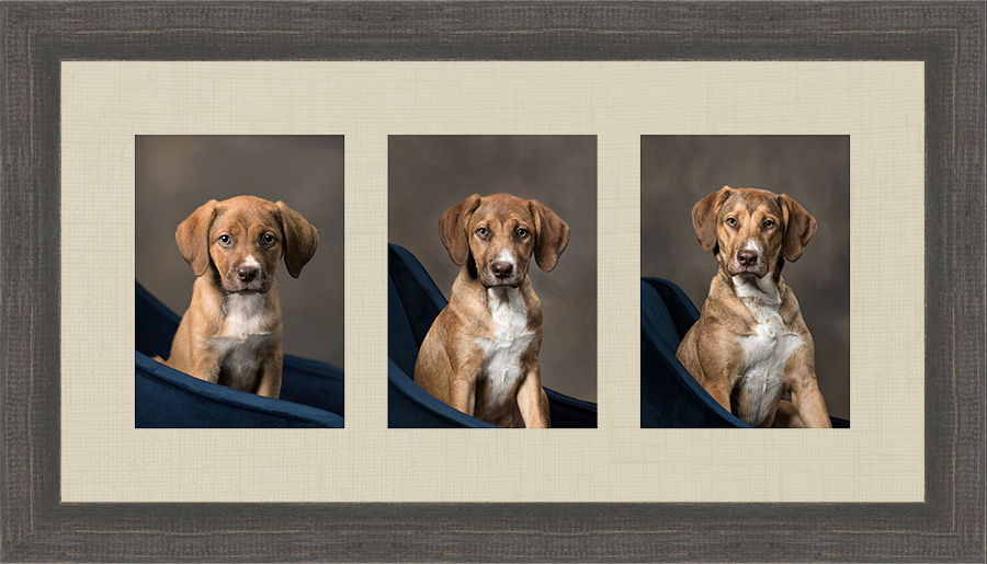 puppy-growing-studio-dog-portrait