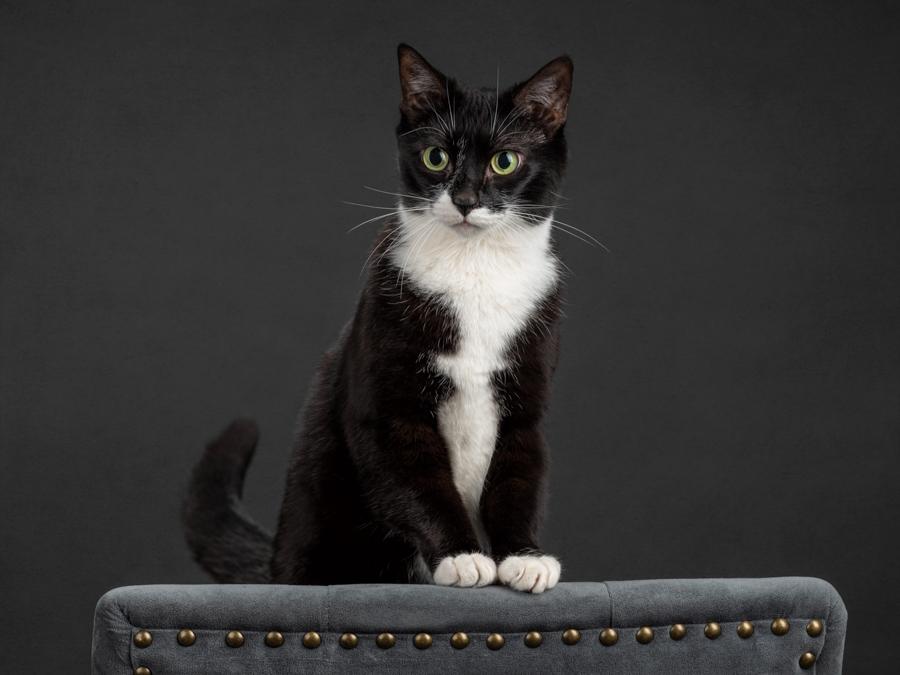 artful-paws-studio-cat-photography-fcas-3821.jpg