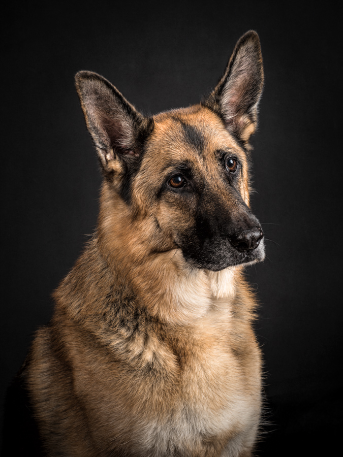 va-dog-photography-studio-dog-7559.jpg