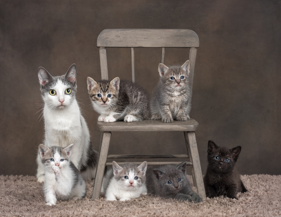 studio-cat-photography-sikittens-chair