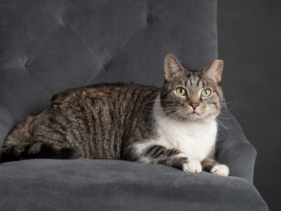 cat-on-grey-chair-photography-studio