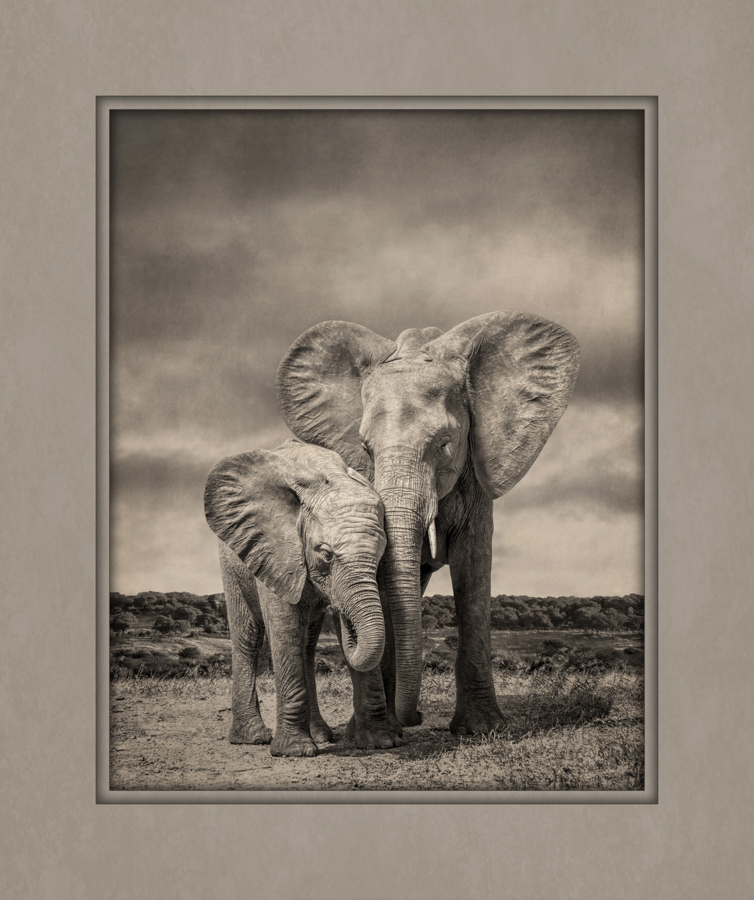 elephants-ilc-loan-image