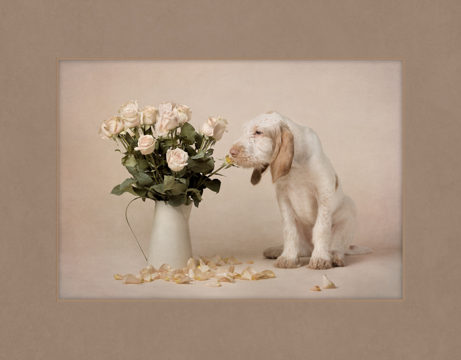 pic-merit-image-puppy-with-roses