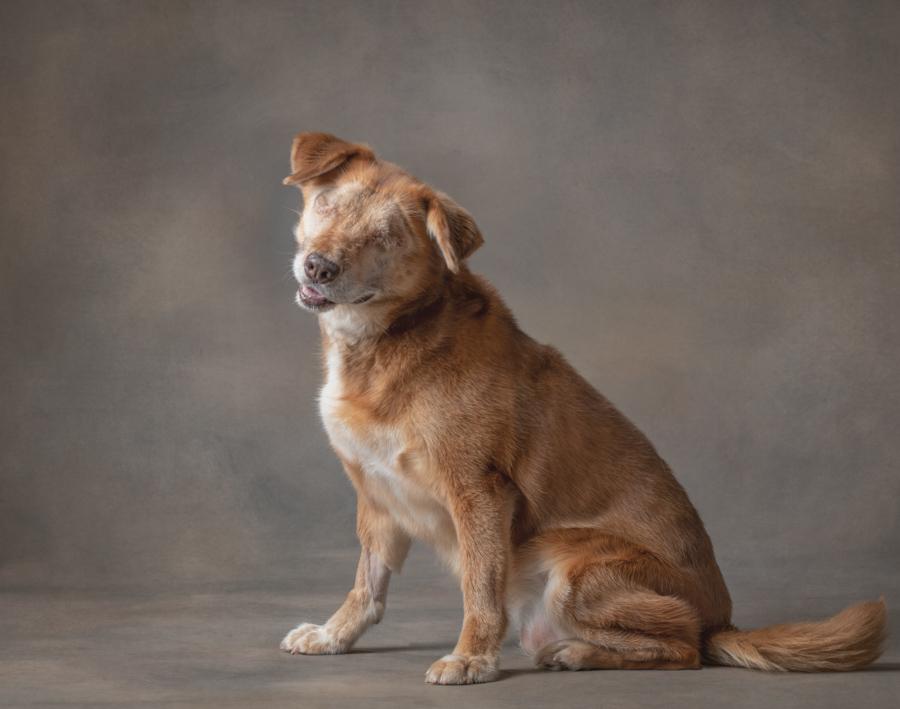 studio-dog-portrait-small-dog-no-eyes