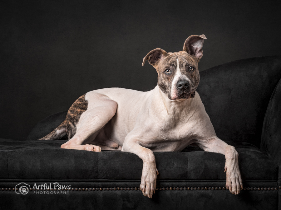 studio-dog-photo-2019-shelter-pet-calendar