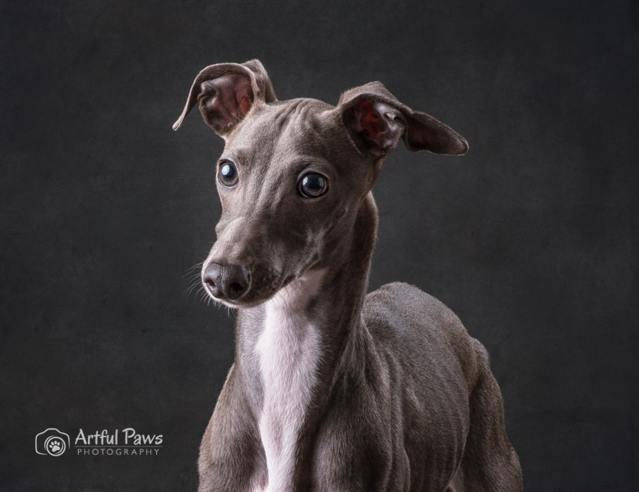 2019-shelter-pet-calndar-shelter-photography-studio