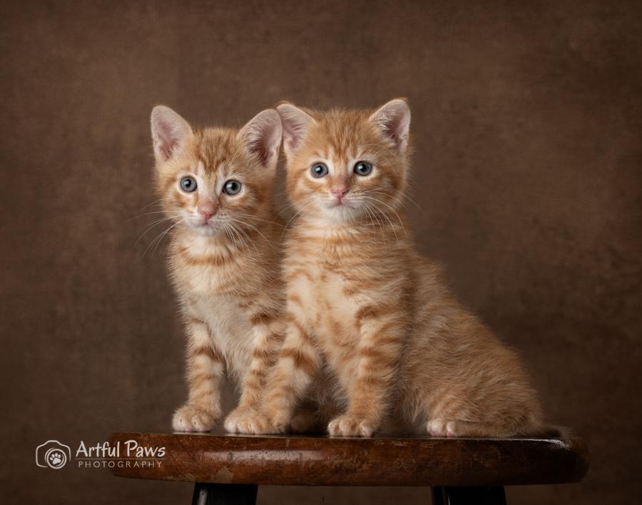 artful-paws-2019-shelter-pet-calendar-5097.jpg