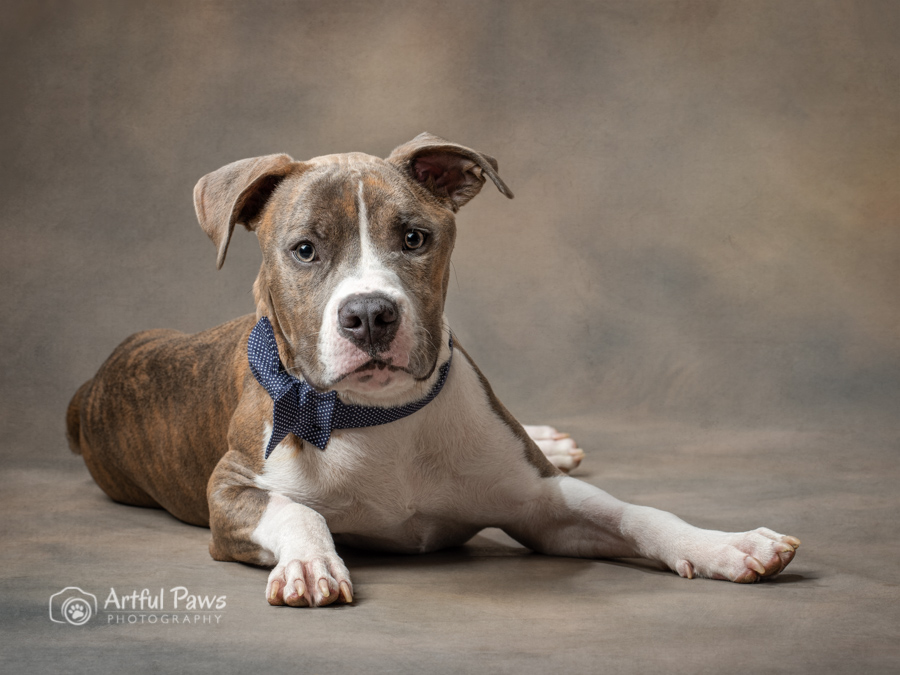 studio-dog-photography-shelter-pet-rescue-dog-2019-calendar