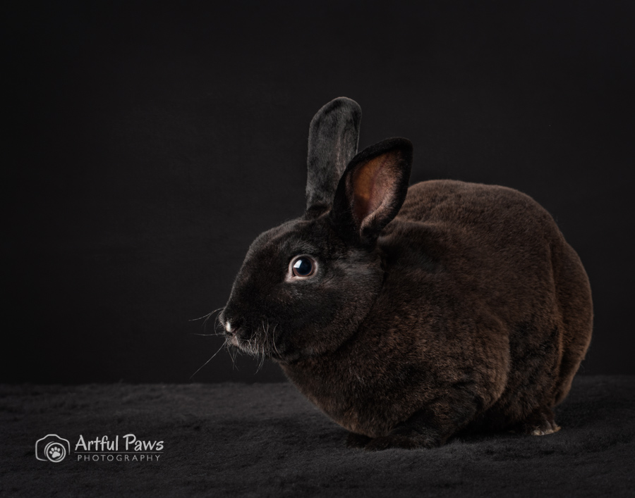 2019-shelter-pet-calendar-studio-animal-photography