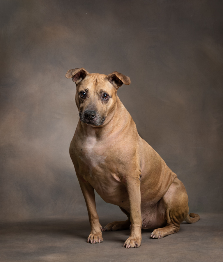 studio-dog-photography-artful-paws-photography