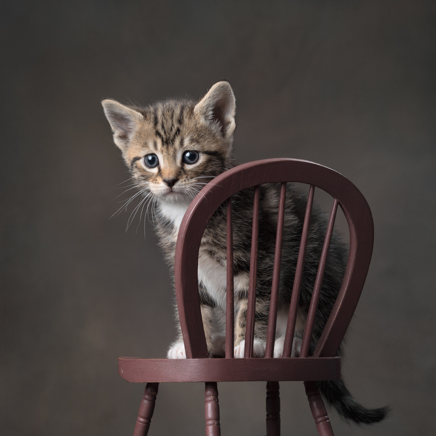 studio-kitten-photography