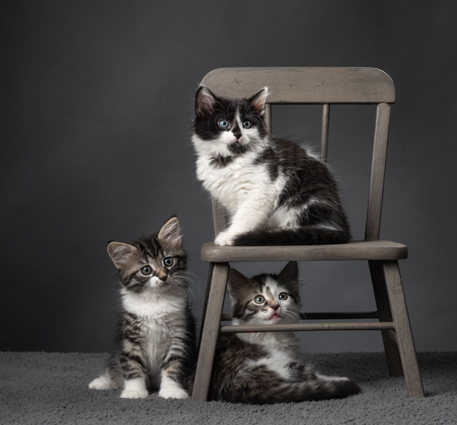 three-kittens-photography-studio