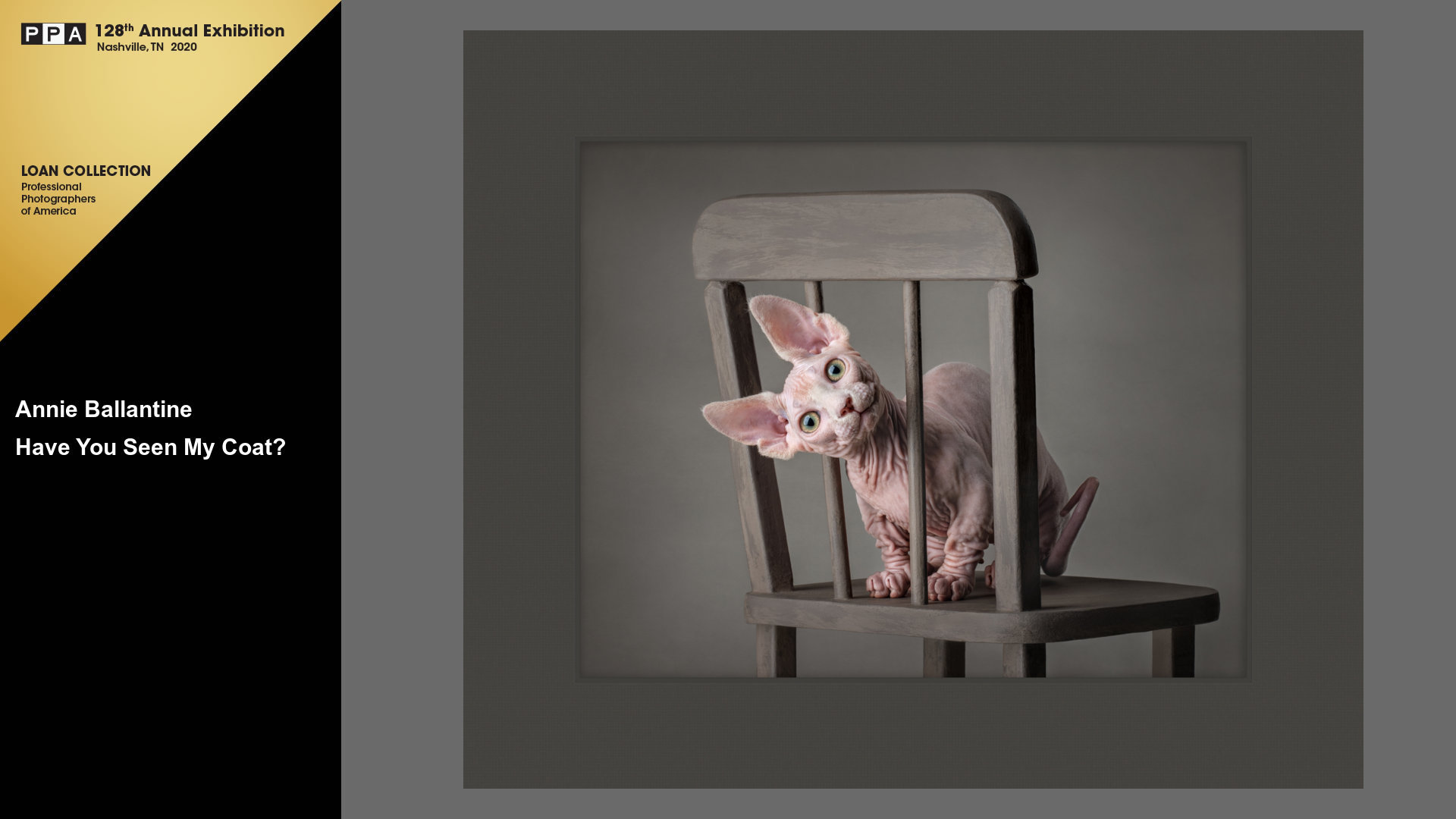 ipc-loan-image-hairless-cat