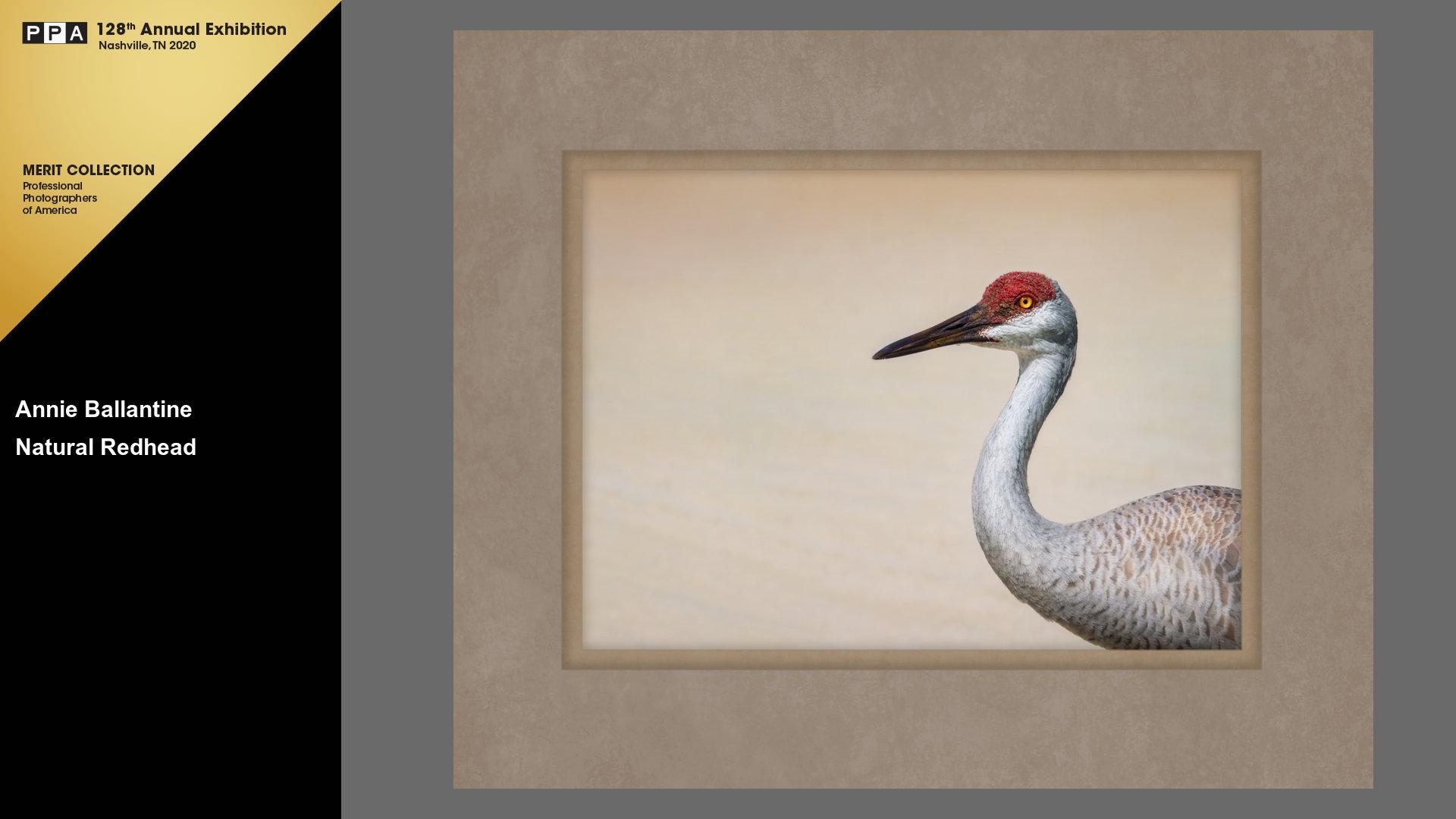 ipc-merit-image-sandhill-crane