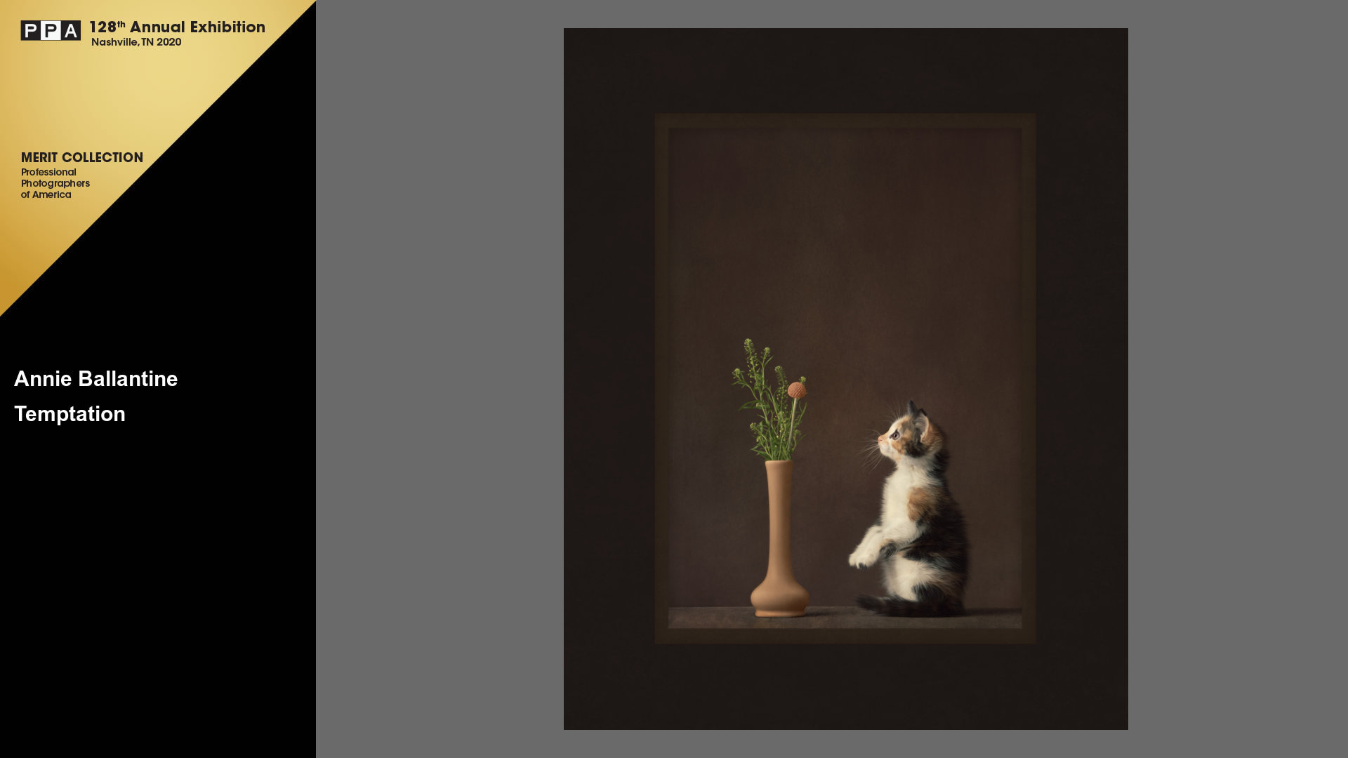 2019-international-photographic-competition-ipc-merit-image-kitten-flowers-studio