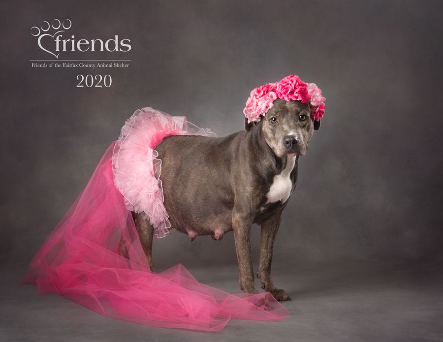 artful-paws-shelter-animal-calendar-2020-2-2.jpg