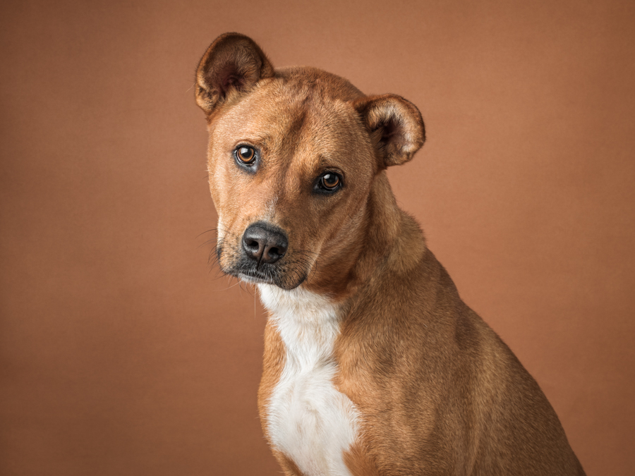 studio-shelter-dog-photography
