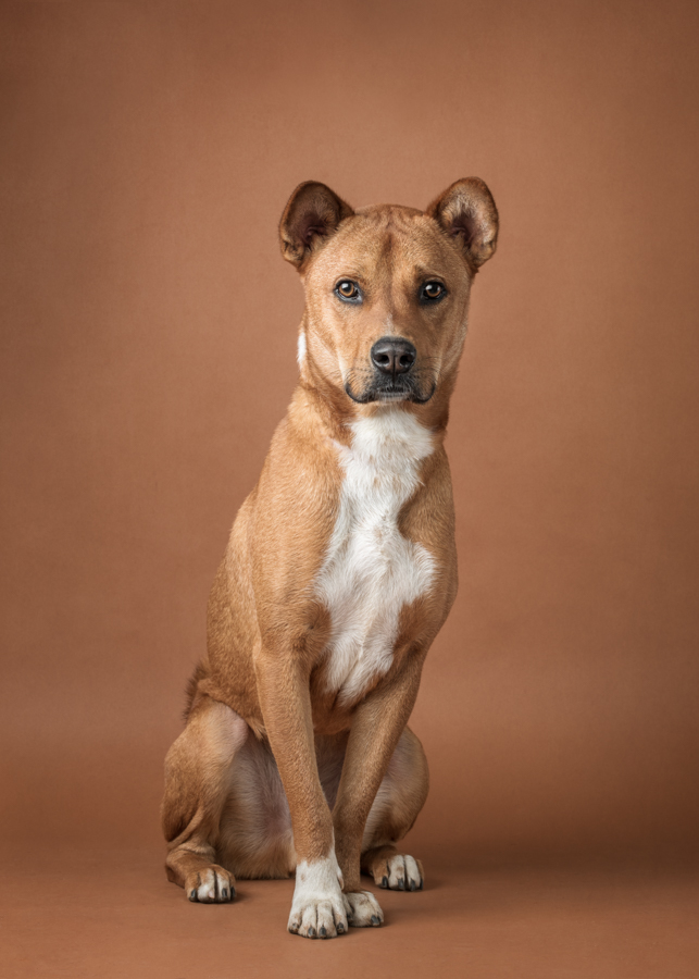 shelter-dog-photography-studio