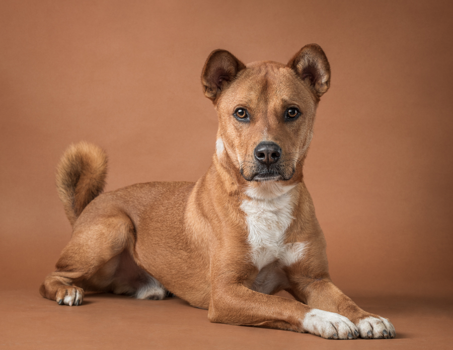 studio-dog-photography-shelter-dog