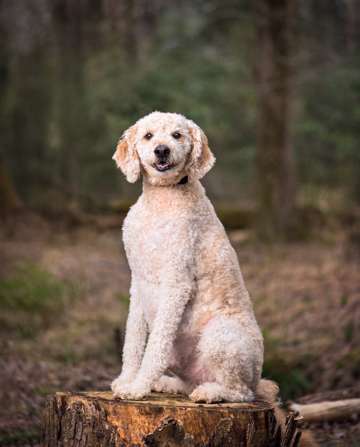 dog photography outdoor portrait