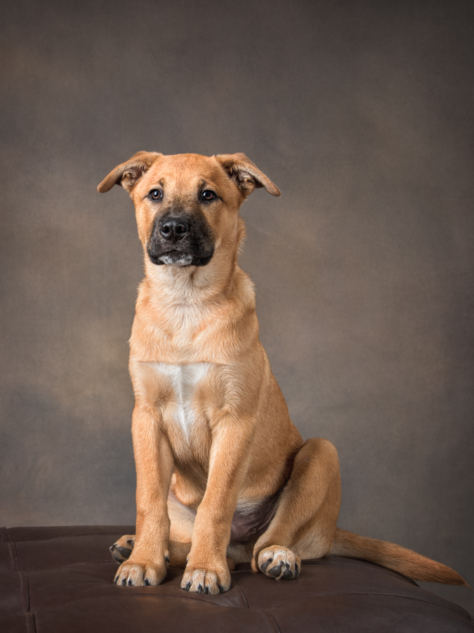 dog photography studio puppy portrait